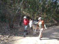 驴散步伴随着一头驴