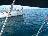 Nos encontramos con un delfin en el barco