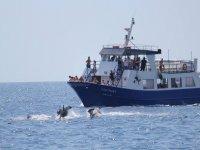 Delfines frente al barco en Fuengirola