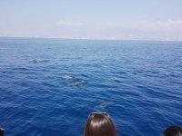 Viendo los delfines en su habitat