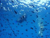 Snorkeling en paraje natural