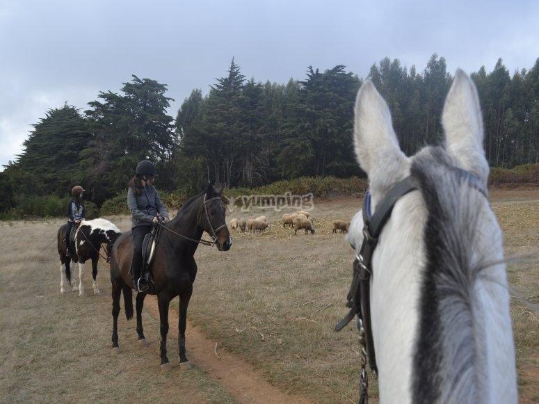 Montar a caballo por La Esperanza