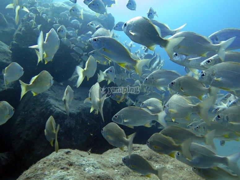 丰富的海洋动物