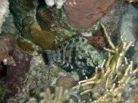 种模仿海洋环境水下动物