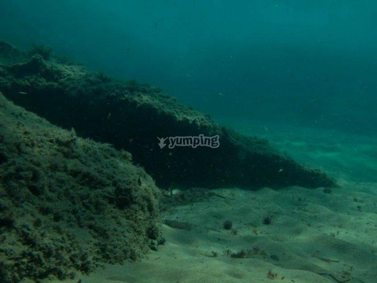 la belleza de las profundidades