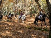 Sobre los caballos en el bosque