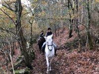 Por el bosque a caballo
