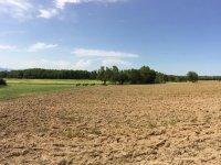 Ruta por el campo a caballo