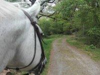 Acercamiento al caballo y paseo por el bosque Orgi