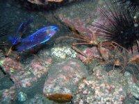 当地鱼海动物潜水组