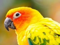 the beauty of parrots