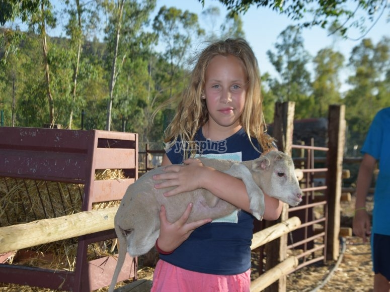 Activities on the farm for children