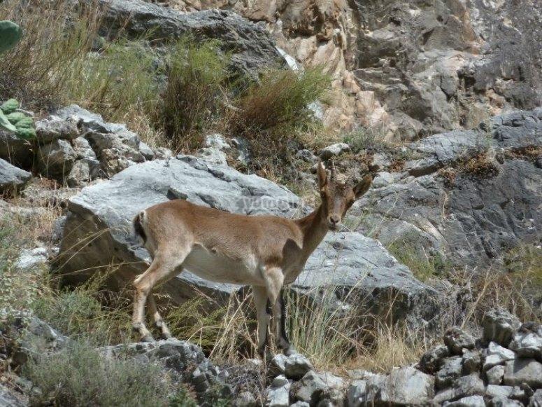 Fauna durante la ruta de senderismo