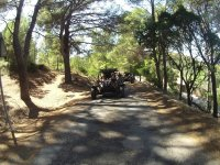 Between the grove with the buggy