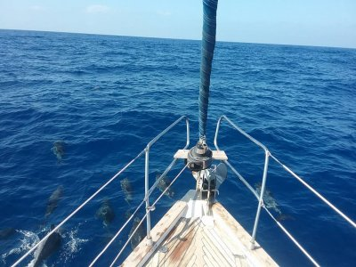 Sailing boat excursion Puerto de Los Gigantes 3h