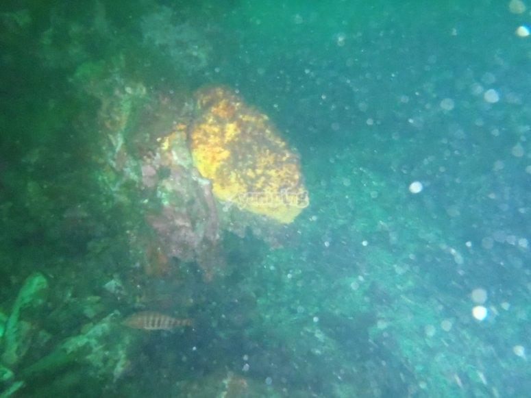 Descubre el lecho marino