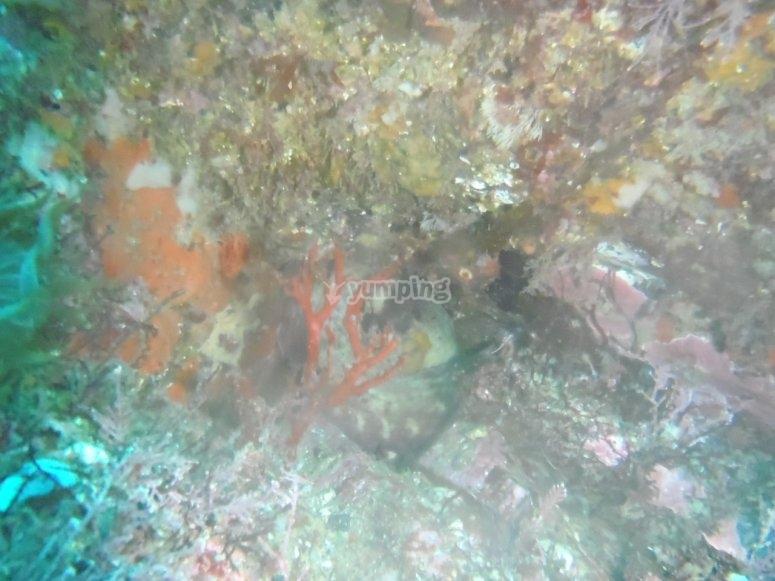 Open Water Diver in Viveiro