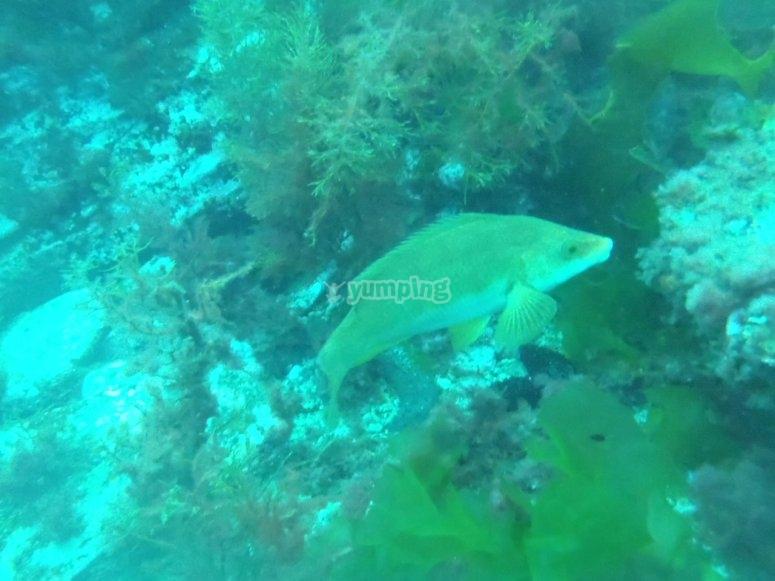 Fauna acuática