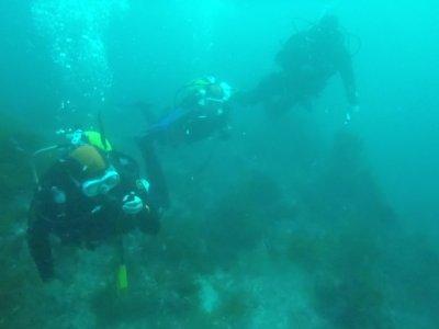 Escursioni subacquee sull'estuario del Viveiro