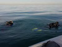 Diving immersion in Denia