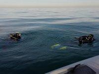 Inmersión de buceo en Denia
