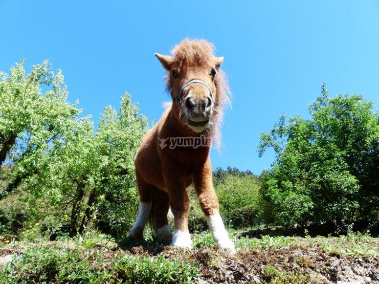 Poni en Segovia