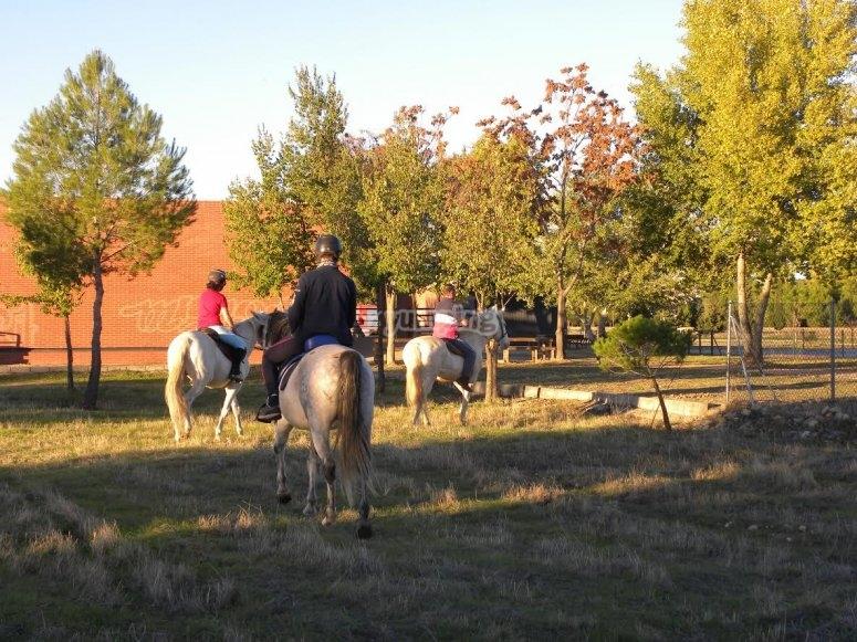 A caballo entre arboles