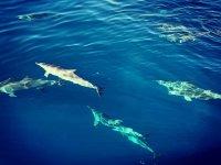 鲸类在我们旁边游泳