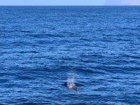 海豚在海岸旁移动水