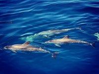 海豚在我们的游艇旁边游泳