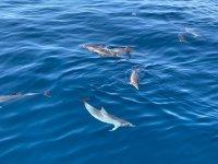在我们海岸上的海豚群