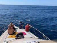 与海豚一同航行