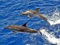 海豚在水里跳跃