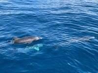一对海豚在游泳
