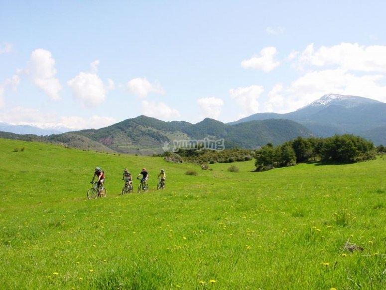 Biciclette in campagna