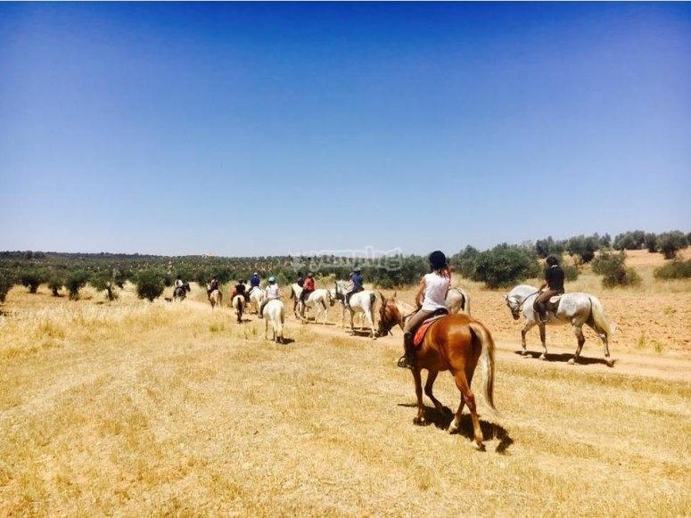 骑在田野里--999-在马前面的狗