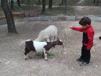 alimentando a la cabra