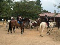 Al centro con i cavalli