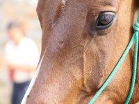 Primo piano di uno dei nostri cavalli