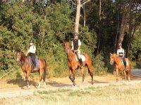 Andando in campo con i cavalli