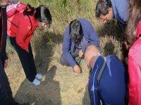 梳理土地动物观赏