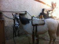 马准备-99-马Nerpio的Nogueras