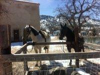 caballos de Las Nogueras de Nerpio