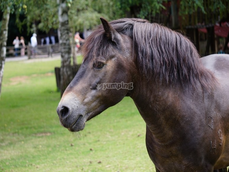 Horse in the ranch