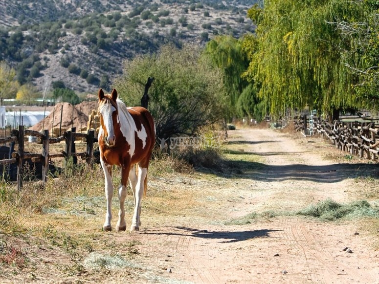 Horse freely running around
