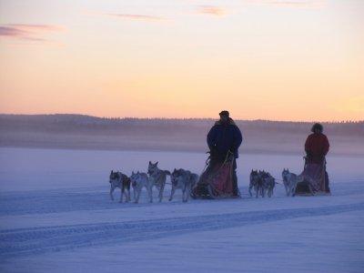 Paseo con perros de trineo 3.5 km Adulto