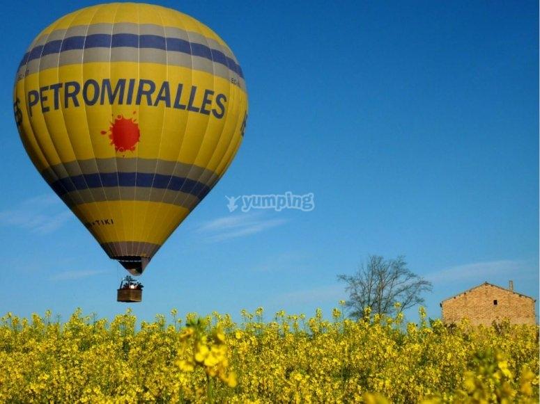 sobre campo de flores amarillas
