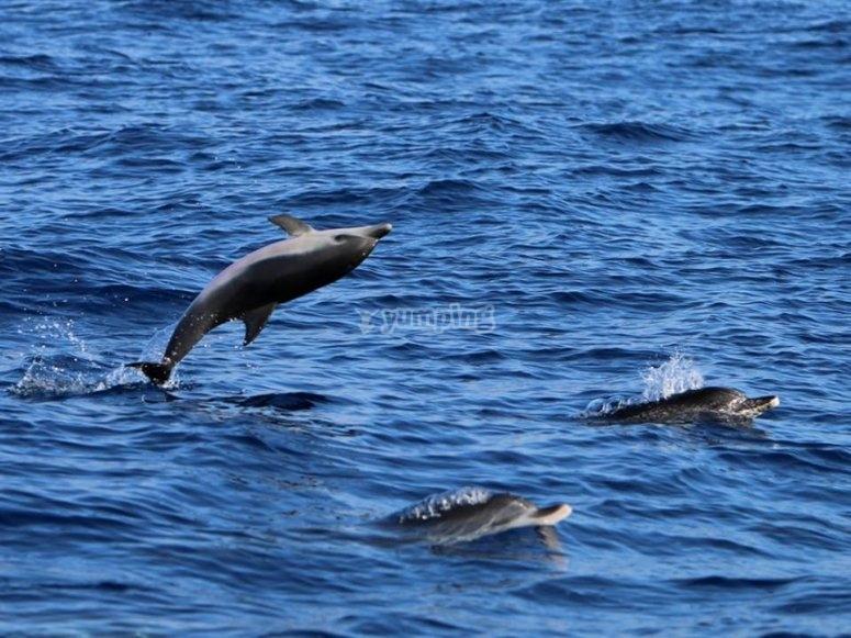 Delfines en La Gomera