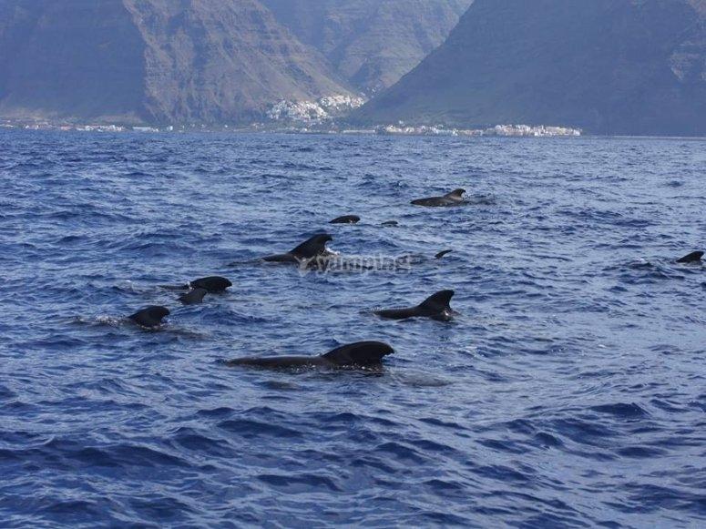 Avistamiento de cetáceos en Valle Gran Rey
