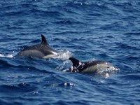Avistamiento de cetáceos en La Gomera